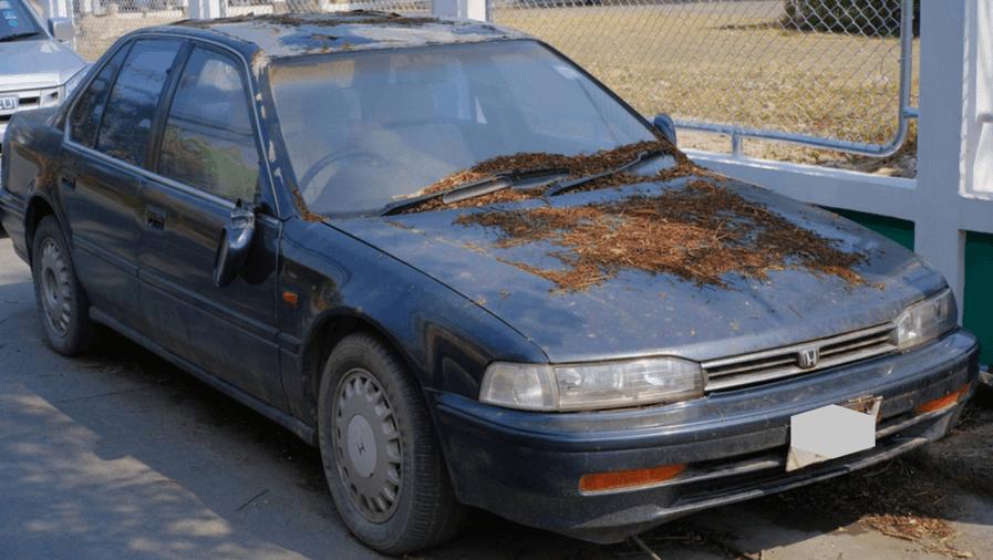 damaged car buyers